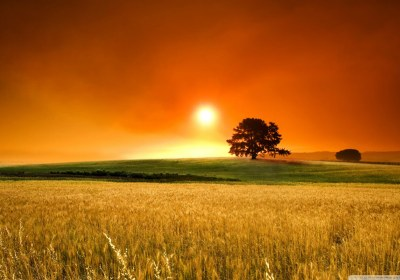 summer_sunset_2-wallpaper-1280×800